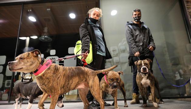 Una propietària passejant gossos de raça Staffordshire americà.