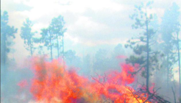 Mites i realitats dels incendis forestals.