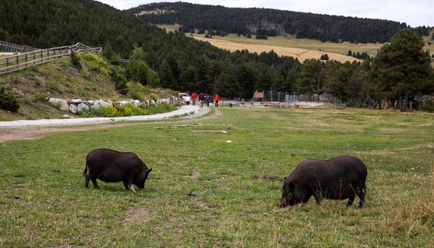 Zona del prat de Conangle on hi havia fins ara el parc d'animals.