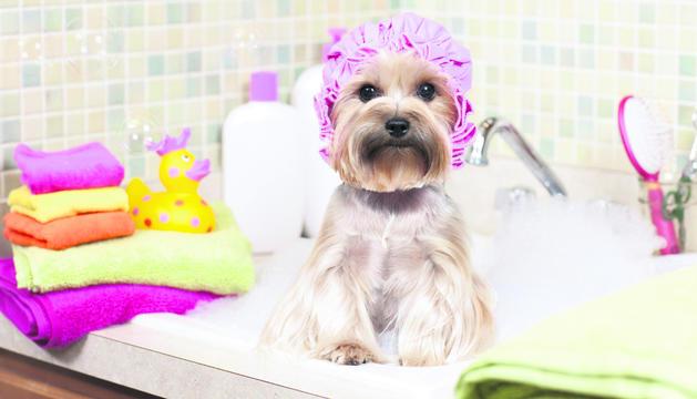 És vital garantir una higiene adequada de la nostra mascota.