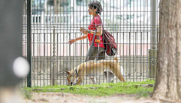 Una dona passeja un gos.